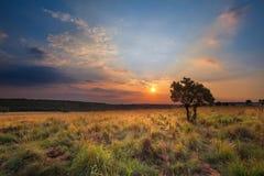 Puesta del sol mágica en África con un árbol solitario en una colina y louds Foto de archivo libre de regalías