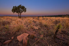 Puesta del sol mágica en África con un árbol solitario en una colina y louds imagen de archivo