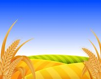 Puesta del sol mágica sobre el campo de trigo Foto de archivo