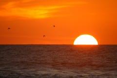 Puesta del sol magnífica en Piha en Auckland Nueva Zelandia fotografía de archivo