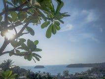 Puesta del sol del mar del árbol fotos de archivo