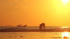 Puesta del sol del mar con el perro y el barco metrajes