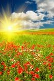 Puesta del sol maravillosa sobre prado verde. Imagen de archivo