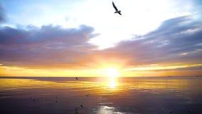 Puesta del sol nublada del mar de la escena tranquila con las gaviotas que vuelan y que flotan en el agua en la puesta del sol metrajes