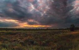Puesta del sol nublada del verano La puesta del sol nublada impresionante sobre las flores de la estepa florece fotos de archivo libres de regalías