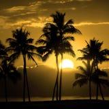 Puesta del sol o salida del sol tropical de la silueta de las palmeras Foto de archivo