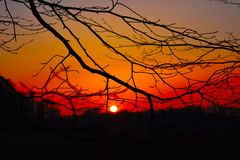Puesta del sol observada a través de los árboles Fotografía de archivo libre de regalías