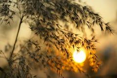 Puesta del sol otoñal imagenes de archivo