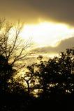 Puesta del sol otoñal en bosque Imagen de archivo