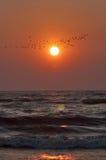 Puesta del sol, pájaros y ondas del mar Foto de archivo libre de regalías