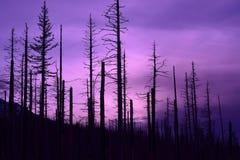 Puesta del sol púrpura Imágenes de archivo libres de regalías