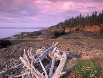 Puesta del sol púrpura y rosada por la playa imagen de archivo