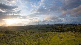 Puesta del sol Paisaje de Toscana: colinas, cortijos, olivos, cipreses, vi?edos Las colinas de Chianti al sur de Florencia fotografía de archivo libre de regalías
