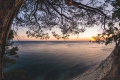 Puesta del sol del paisaje marino con el árbol conífero imagen de archivo