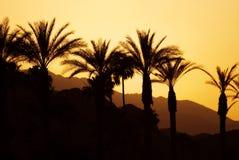 Puesta del sol Palm Spring Fotografía de archivo libre de regalías