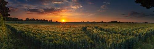 Puesta del sol panorámica sobre un campo de trigo de maduración Imagen de archivo libre de regalías
