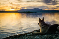 Puesta del sol, perro, y lago Fotos de archivo