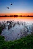 Puesta del sol por el lago Imagen de archivo libre de regalías