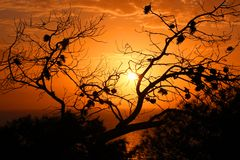 Puesta del sol por el mar a través de un árbol Imágenes de archivo libres de regalías
