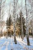 Puesta del sol por la tarde del invierno en el parque municipal Imagenes de archivo