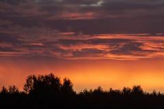 Puesta del sol potente sobre siuoulette oscuro del bosque Imagen de archivo libre de regalías