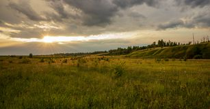 Puesta del sol, prado, fresa e hierba del paisaje del verano en la luz Naturaleza foto de archivo libre de regalías