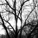 Puesta del sol - primero plano del árbol Imagen de archivo