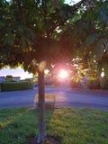 Puesta del sol que baja detrás del árbol foto de archivo