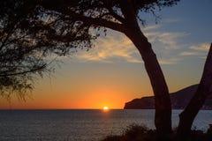 Puesta del sol que enmarca del árbol Imagen de archivo