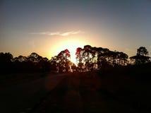 Puesta del sol que siluetea árboles Fotografía de archivo libre de regalías