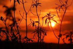 Puesta del sol roja Fotos de archivo libres de regalías