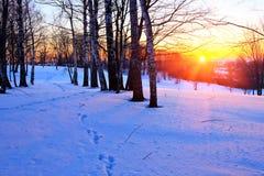 Puesta del sol roja en un bosque del invierno Imagen de archivo libre de regalías