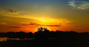 Puesta del sol roja hermosa con los ?rboles y los p?jaros ganados foto de archivo libre de regalías