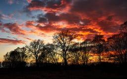 Puesta del sol roja sobre los árboles Fotos de archivo