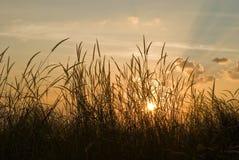 Puesta del sol romántica con la hierba de la flora Imagenes de archivo