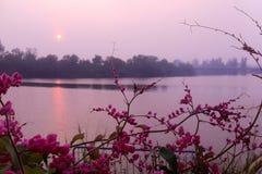 Puesta del sol rosada Fotografía de archivo