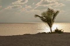 Puesta del sol rosada trémula en el mar con la palma silueteada en la playa Fotos de archivo