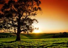 Puesta del sol rural Fotografía de archivo libre de regalías