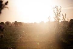 Puesta del sol rural Imágenes de archivo libres de regalías