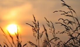 Puesta del sol/salida del sol del trigo Imagen de archivo libre de regalías