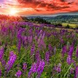 Puesta del sol sangrienta fantástica cielo cubierto majestuoso con cl colorido Fotos de archivo libres de regalías