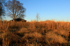 Puesta del sol serena en parque Fotografía de archivo