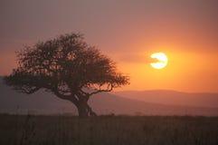 Puesta del sol Serengeti NP, Tanzania Fotografía de archivo libre de regalías