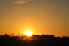 Puesta del sol, silueta y colores que brillan intensamente, anaranjados y negros, sobre todo cielo claro de la hierba Imagenes de archivo