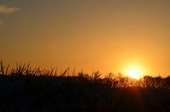Puesta del sol, silueta y colores que brillan intensamente, anaranjados y negros, sobre todo cielo claro de la hierba Fotografía de archivo