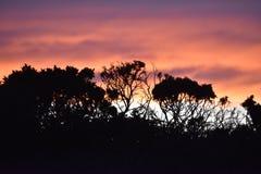 Puesta del sol silueteada Foto de archivo libre de regalías