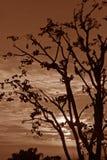 puesta del sol silueteada aepia del invierno en la India himachal foto de archivo