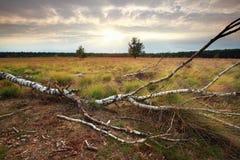 Puesta del sol sobre árbol caido Imagen de archivo libre de regalías