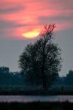 Puesta del sol sobre árbol en parque nacional en Alemania Imagen de archivo