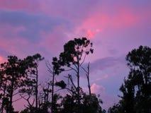 Puesta del sol sobre árboles imagenes de archivo